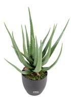 Aloe Vera artificiel H 60 cm cactus plante grasse en pot pvc