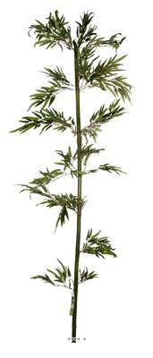 Canne bambou naturelle H 240 CM 720 feuilles