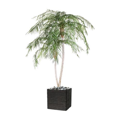 Palmier Phoenix Artificiel H 225 cm  Anti-UV en pot