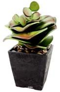 Cactus cactée éléphant pot chocolat et finition gravier H 24cm
