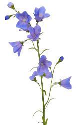 Campanule artificielle en tige Fleur artificielle des champs H 65 cm ideale pour bouquet Bleu ciel