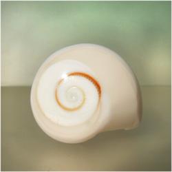 Bague faite dans un coquillage avec Oeil de Lucie Taille 55/56