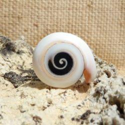 Bague coquillage naturel entier petite spirale en résine Taille 60