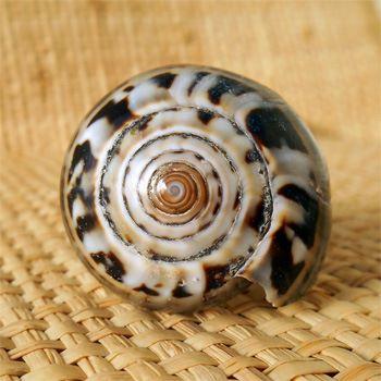 Bague faite dans un coquillage Naturel entier Taille 61 / 62