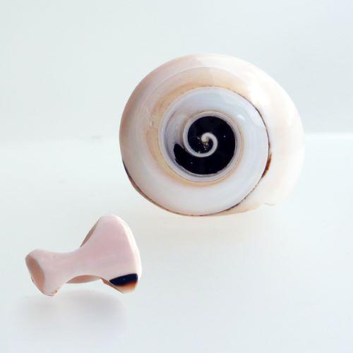 Bague coquillage véritable rose pale petite spirale noire Taille 63