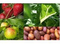 LE PANIER MIXTE (Fruits et Légumes).