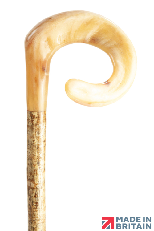 Handmade Curly Ram's Horn Shepherd's Crook on Hazel (Clockwise Curl)