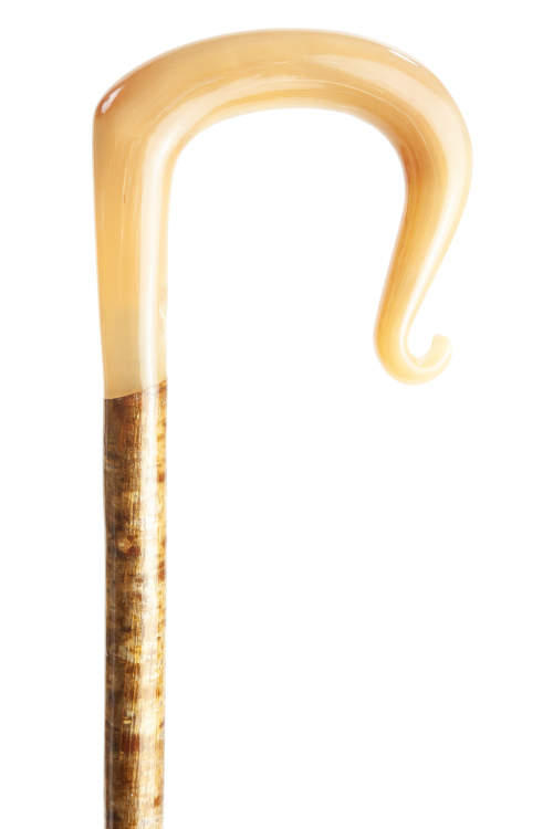 Handmade Ram's Horn Shepherd's Crook with Curl Nose on Hazel Shaft
