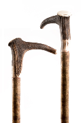Staghorn Crown Handled Hiking Stick on Hazel Shaft