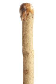 FSC Ash Coppice Knob Walking Stick - Extra Stout