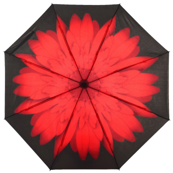 Reverse Auto Open & Close Folding Umbrella - Red Daisy
