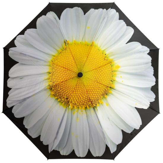 Reverse Auto Open & Close Folding Umbrella - White Daisy