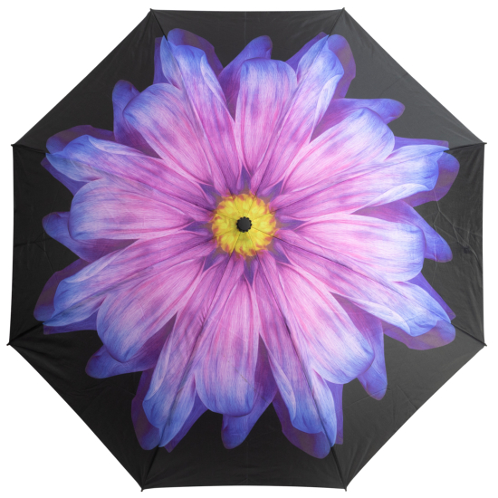 Reverse Auto Open & Close Folding Umbrella - Purple Daisy