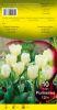 TULIPE FOSTERIANA 12+  Purissima blanc    Pochette de 10 - code E