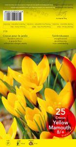 CROCUS Yellow Mammouth jaune 8+      Pochette de 25 - code F