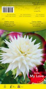DAHLIA CACTUS My Love blanc Pochette - code A