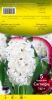 JACINTHE 16+ Fairy white blanc   Pochette de 5