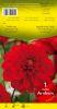 DAHLIA BORDER Arnhem décoratif rouge Pochette - code A