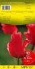 TULIPE KAUFMANIANA 12+ scarlet baby, écarlate  Pochette de 10 - code E