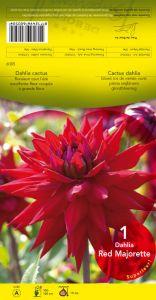 DAHLIA CACTUS Best of red