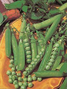POIS NAIN Petit Provençal sac de 5 kg