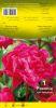 PIVOINE Paeonia Karl Rosenfield rouge Pochette - code F