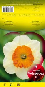 NARCISSE Velasquez blanc coupe orange     Pochette de 5 - code E