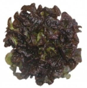 LAITUE A COUPER red salad bowl Pqt 100 g