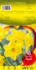 NARCISSE-JONQUILLE Quail jaune odorant Pochette de 10