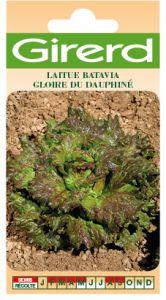 Laitue Batavia gloire du Dauphiné  sachet 1 g