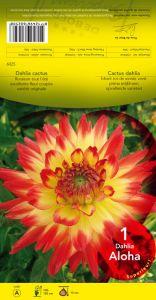 DAHLIA CACTUS Aloha jaune pointe rouge Pochette - code A