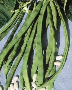 HARICOT A RAMES Phénomène sac de 5 kg