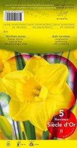 NARCISSE Siècle d'or trompette jaune  Pochette de 5