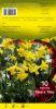 NARCISSE PLURIFLORE Tête à Tête jaune     Pochette de 10 - code E