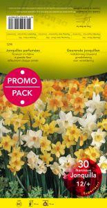 JONQUILLE PARFUMEE 12+ mélange par 30 PROMO-PACK