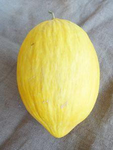 Melon jaune canari BIO sachet 3 g
