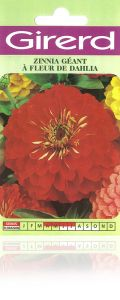 Zinnia géant fleur dalhia sachet 2 g