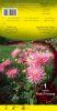 DAHLIA BORDER Park Princess cactus rose Pochette - code A