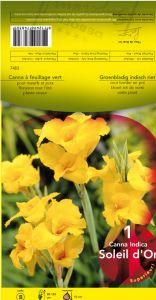 CANNA Soleil d'Or jaune  Pochette - code B