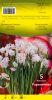 NARCISSE PAPERWHITE blanc pour pots    Pochette de 5 - code E