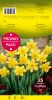 NARCISSE trompette Carlton jaune 14+ par 25 PROMO-PACK