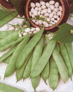HARICOT NAIN Coco blanc précoce sac de 5 kg