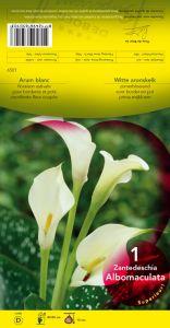 ARUM ZANTEDESCHIA Albomaculata blanc Pochette - code D