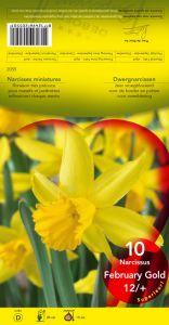 NARCISSE February Gold jaune très précoce   Pochette de 10 - code D