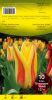 TULIPE KAUFMANIANA 12+ Verdi jaune et rouge  Pochette de 10 - code D