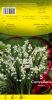 MUGUET Convallaria Pochette de 5 griffes - code F