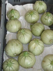 COURGETTE de Nice à fruit rond clair Pqt 100 g