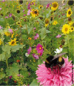 MELANGE DE FLEURS mellifères spécial abeilles, boite 100 g