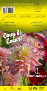 DAHLIA CACTUS Romantique rose pastel Pochette - code A