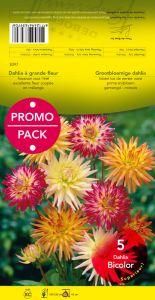 DAHLIA CACTUS en mélange bicolore par 5 - PROMO-PACK